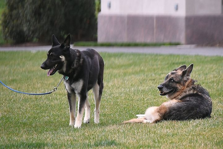 Champ (right) and Major on the South Lawn of the White House in Washington, D.C., in March 2021.