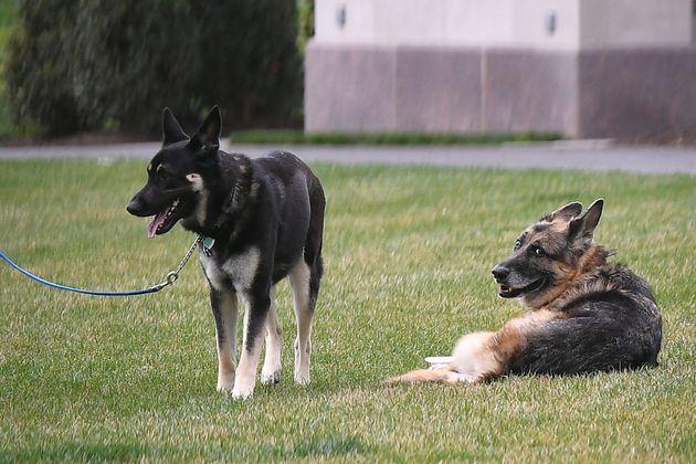 메이저(왼쪽)와