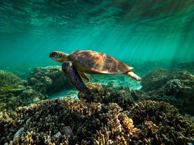 Σε κίνδυνο ο Μεγάλος Κοραλλιογενής Ύφαλος λέει ο ΟΗΕ - Γιατί αντιδρά όμως η