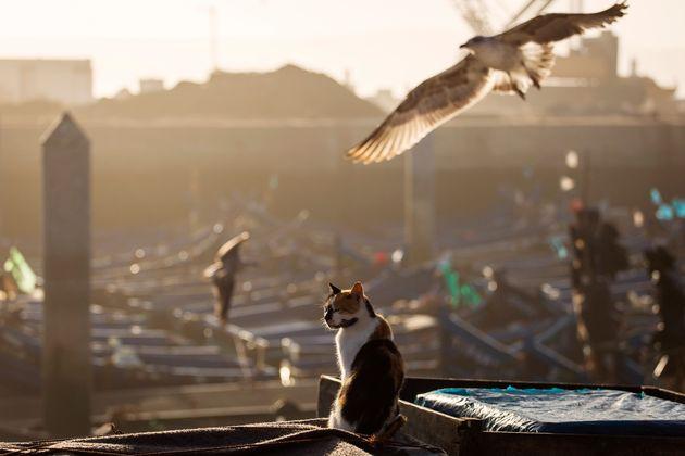 «Η ιστορία του γάτου που έμαθε σ' ένα γλάρο να