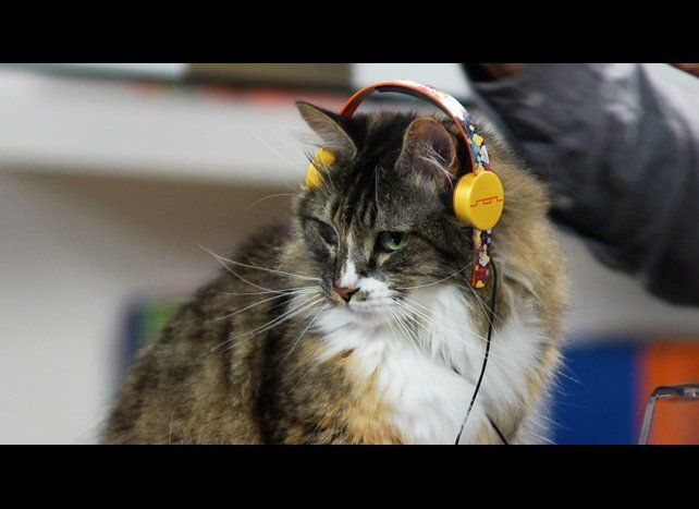 Sometimes your cat wants to listen to that Katy Perry song without your uninvited judgment. For that, there's Professor Meowi