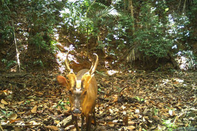 Une photo prise par une caméra automatique dans une forêt du Cambodge le 11 avril