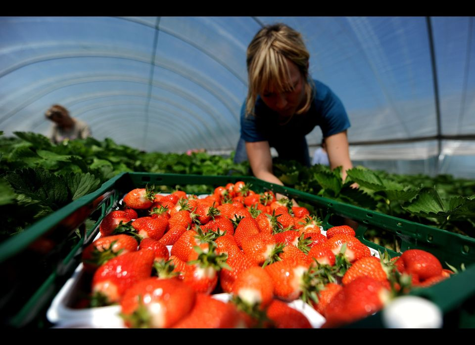 Buy in season. Produce in season is almost always less expensive than out-of-season produce because it's more abundant.