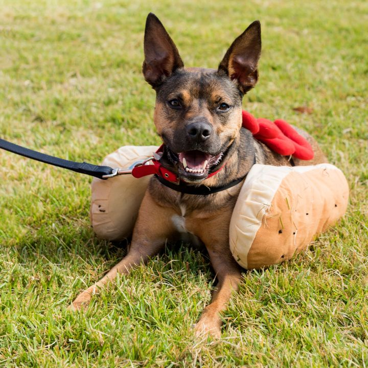 Hot dog! Don't forget about your furry friends, ensuring they have shade and fresh, cool water available to them.