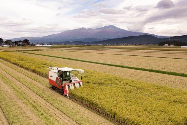 稲刈りをする生産者(山形県)