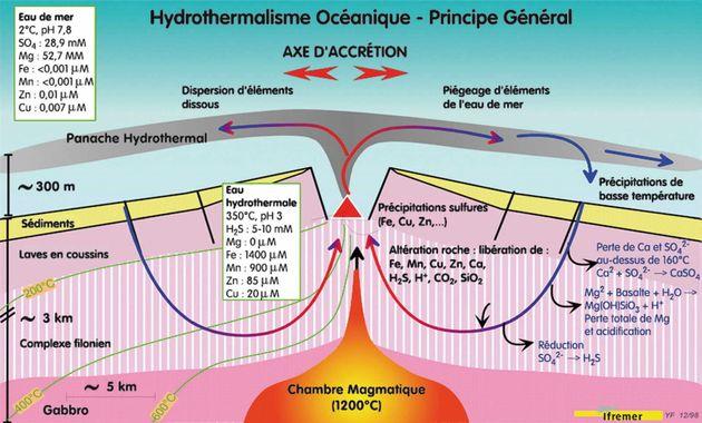 Schéma d'une coupe transversale de dorsale rapide: le cycle de l'eau donne naissance aux sources hydrothermales....