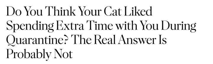"""""""Do You Think Your Cat Liked Spending Extra Time with You During Quarantine? The Real Answer Is Probably Not"""""""
