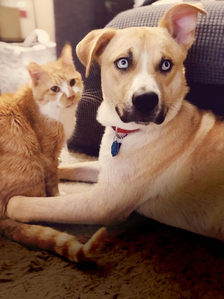 Hank with his foster sibling Dorito the cat.