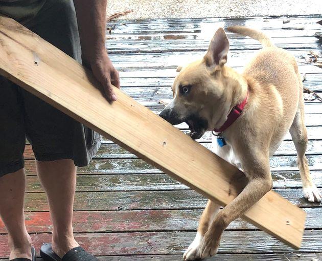 Hank in destruction