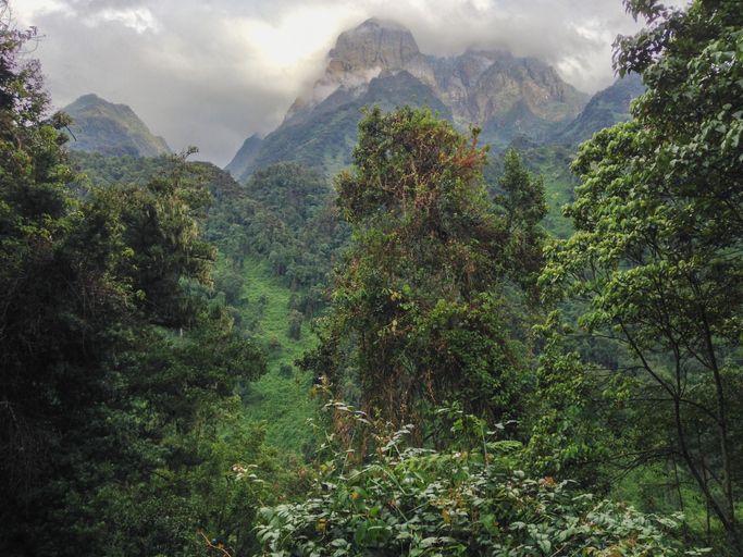 '달의 산'이라 불리는 르웬조리 산지의 모습. 커피 재배의 최적의 조건을 지녔다.
