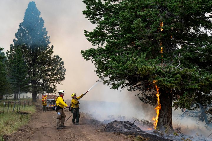 Wildland firefighters spray water onto a tree that caught fire as they were building a fire line for the Lick Creek Fire,on J
