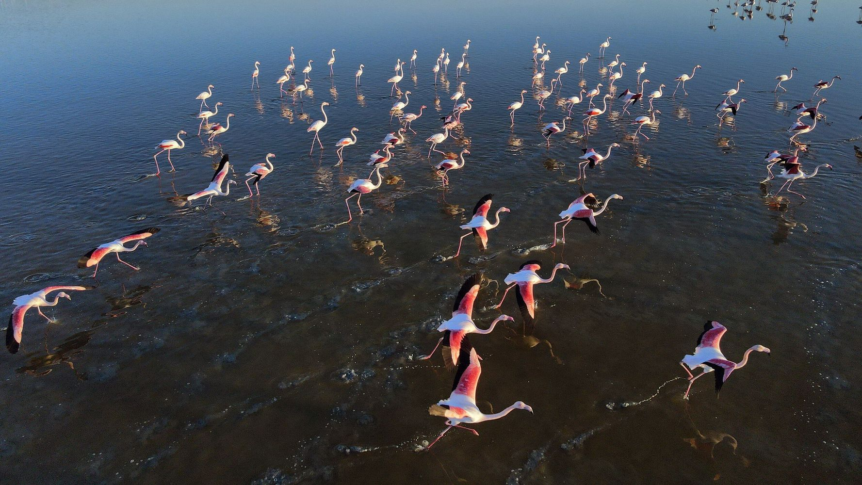 Thousands Of Flamingos Die As Lake In Turkey Dries Up In Drought