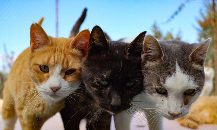 Gatos abandonados y rescatados por un centro.