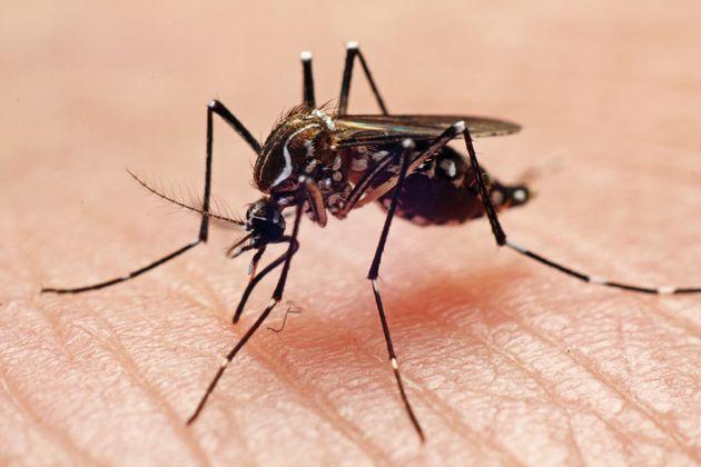 Con l'aumento di temperature e piogge le zanzare si moltiplicano e portano virus trasmissibili con facilità