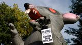 """UPPER MARLBORO, MD- SEPTEMBER, 17. 'Scabby' the giant inflatable rat is a well-known symbol used by protesters in the DC area. """"Scabby' was employed today by the Local 639 Teamsters union as they try to negotiate their contract in Upper Marlboro, MD. 2010. (Photo by Juana Arias/For the Washington Post)"""