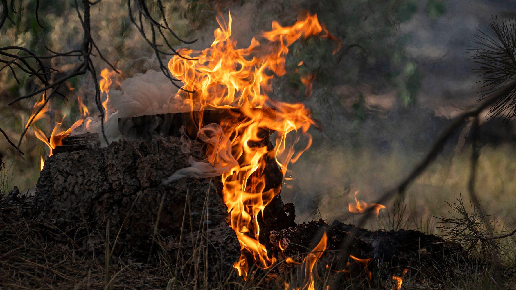Oregon Gov. Warns Of 'Harsh Reality' Amid Mammoth Bootleg Fire