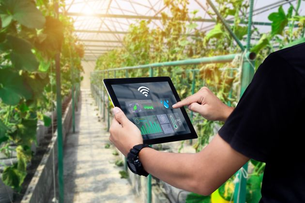 .Man hands holding tablet on blurred organic farm as