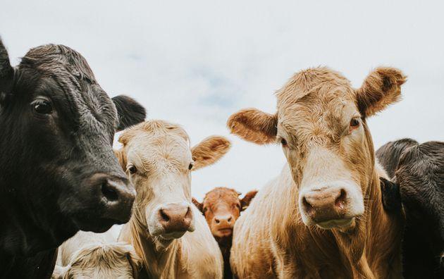 소가 소화과정에서 배출하는 메탄의 20년 기준 지구온난화지수는 이산화탄소의