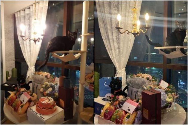 박수홍이 쏟아지는 축하와 선물에 감사인사를 전했다. 박수홍이 받은 결혼선물에는 다홍이 닮은 검정 고양이 인형과 박수홍과 그의 아내 얼굴이 그려진 케이크도