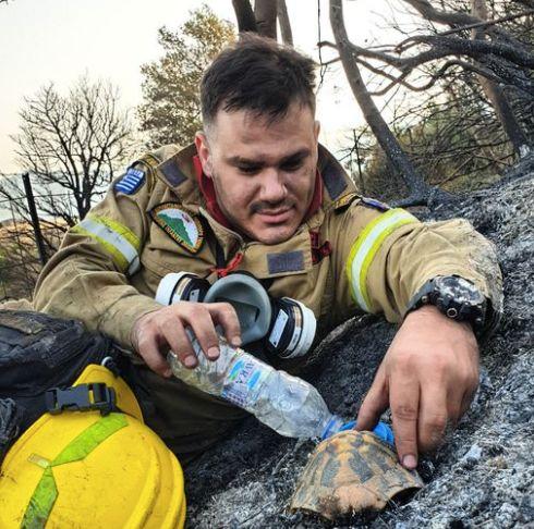 Η συγκινητική φωτογραφία πυροσβέστη στην Αχαϊα που μέσα στις στάχτες δίνει νερό σε μια