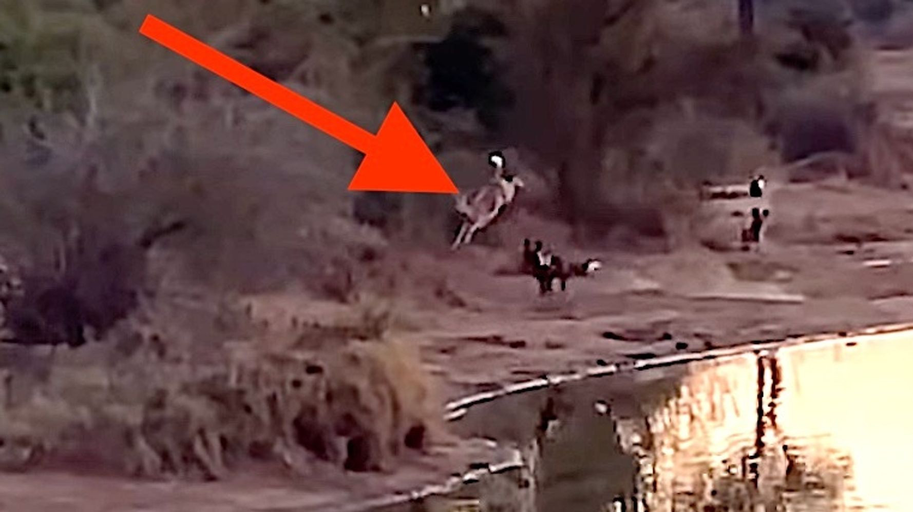 Badass Impala Makes Incredible Escape From Crocodiles, Hippos And 16 Wild Dogs