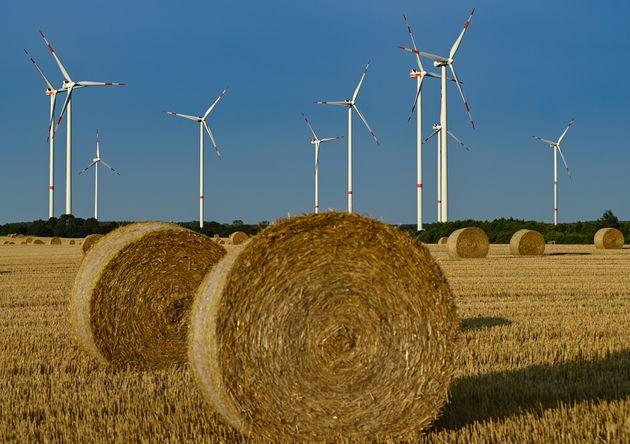 28 July 2021, Brandenburg, Jacobsdorf: Wind turbines at the