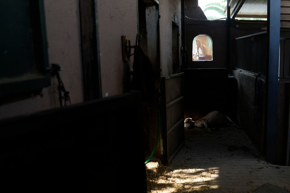 Βαρυμπόμπη, φωτογραφίες από την επόμενη μέρα: Μαύρο στη θέση του πράσινου, στάχτη νοικοκυριά και