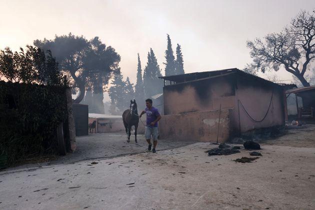 Βαρυμπόμπη: Απομακρύνθηκαν με ασφάλεια 250 άλογα από το πύρινο
