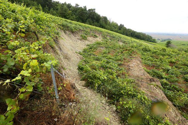 Photo prise le 15 juillet 2021 montrant le vignoble de Champagnetouché par les pluies à...