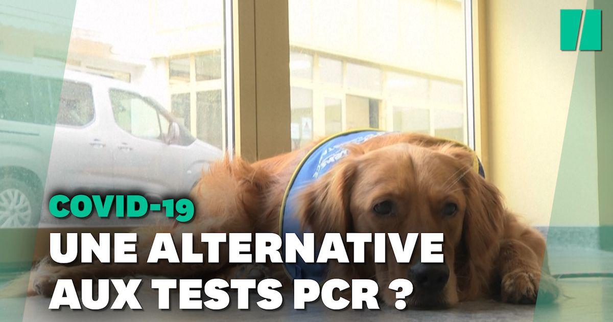 Le premier chien renifleur de Covid-19 testé dans un Ehpad en Alsace