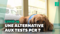 Le premier chien renifleur de Covid-19 testé dans un Ehpad en