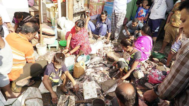 Allevamenti intensivi di pesce: sfruttamento animale, ambientale e violazioni dei diritti
