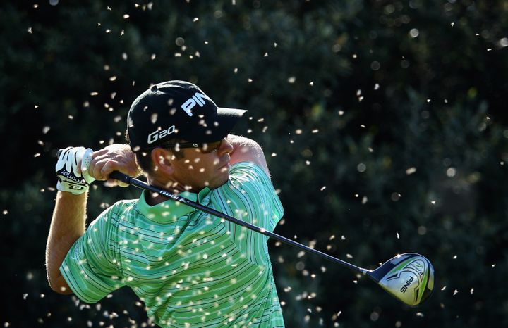 Golfers during the Africa Open in 2012 were hit by waves of flying ants