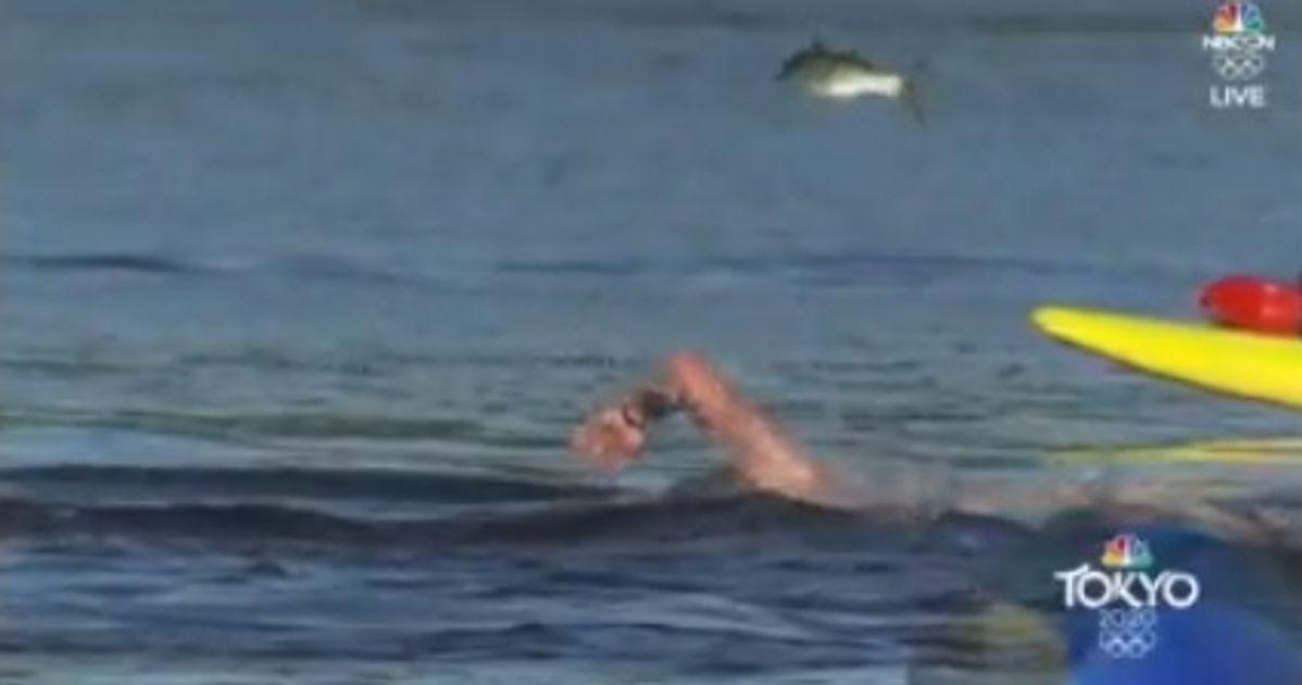 Ce poisson tout proche de décrocher l'or olympique sur le 10 km en eau libre
