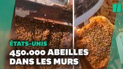 Une famille américaine découvre plus de 450.000 abeilles dans les murs de sa nouvelle