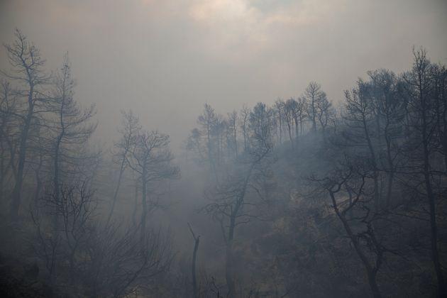 Πάνω από 930.000 στρέμματα η καμένη έκταση στην Ελλάδα