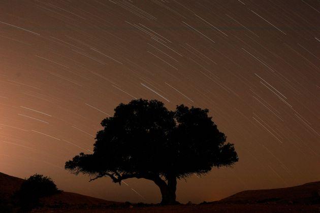 Une longue exposition montre des étoiles derrière un arbre lors de la pluie de météores...