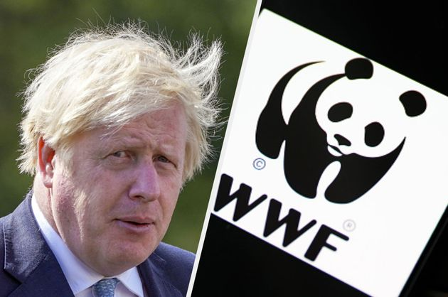 WWF hit out at the government for its budget