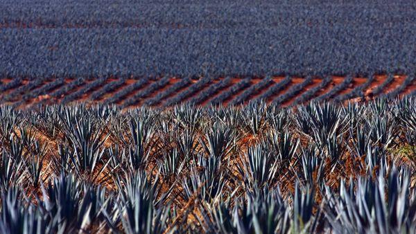 """La <a href=""""http://voces.huffingtonpost.com/victoria-ortiz/mas-que-un-tequila_b_3522773.html"""" target=""""_blank"""">Leyenda del Teq"""