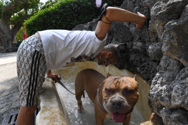 A man and his dog at a fountain in Catania, Sicily, Southern Italy, on Aug.