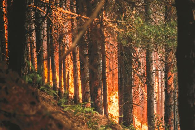 Trees burning in a forest fire at Aspromonte National Park in Calabria, Italy, on Aug.