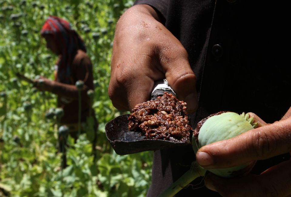 Οπιο: Το παράνομο ναρκωτικό του Αφγανιστάν «ευλογία» για τους