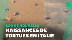 Le premier bain de ces bébés tortues en Italie va vous faire