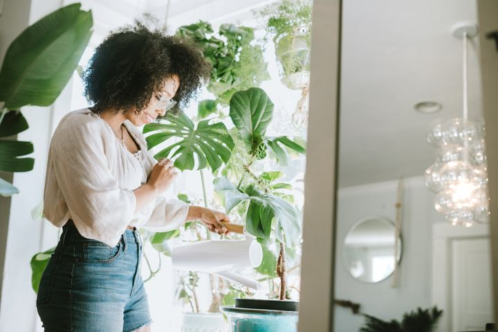 Houseplants are an increasingly popular fixture in millennial homes.