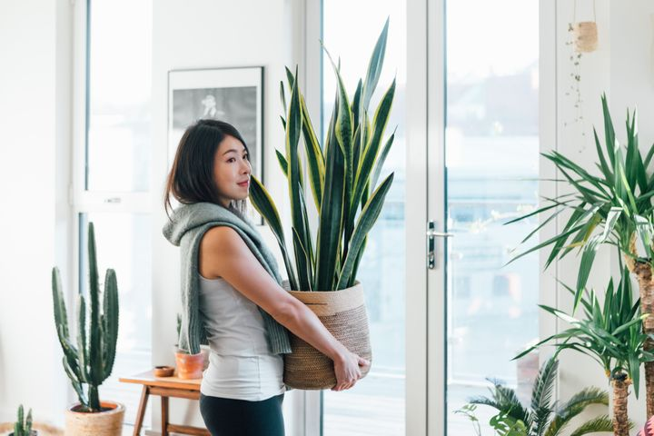 Invest in the plants that make most sense in your home environment.