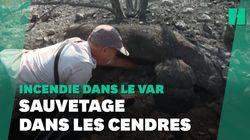 Incendie dans le Var: opération de sauvetage de tortues dans une réserve