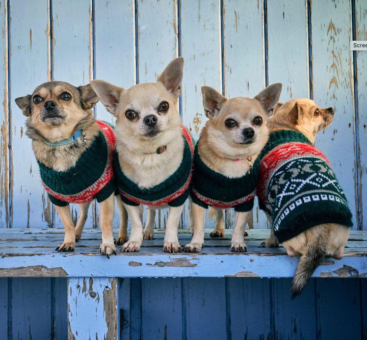 Rae Radford's dogs, aka 'The Bear Family'