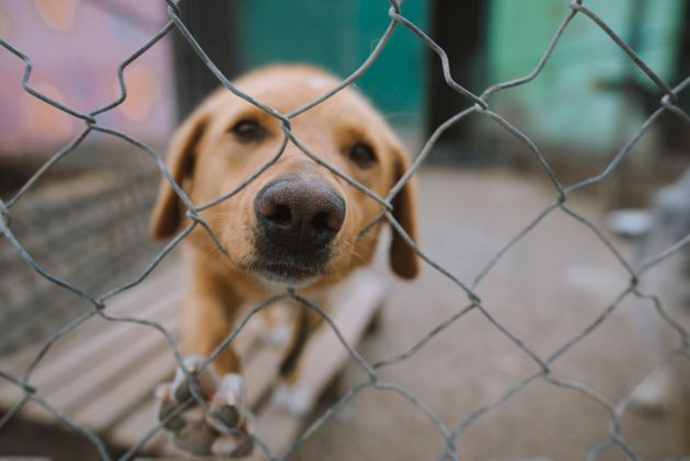 It was not immediately clear how many dogs were killed (file