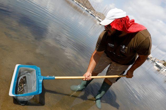 Una persona recoge decenas de pequeños peces muertos en las aguas del Mar