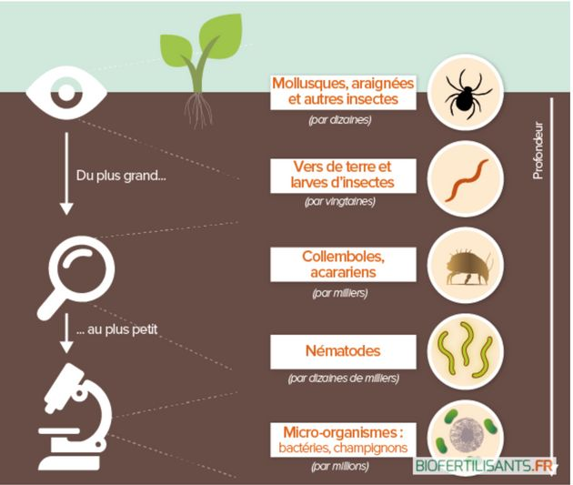Schéma représentant des organismes essentiels à la bonne santé du